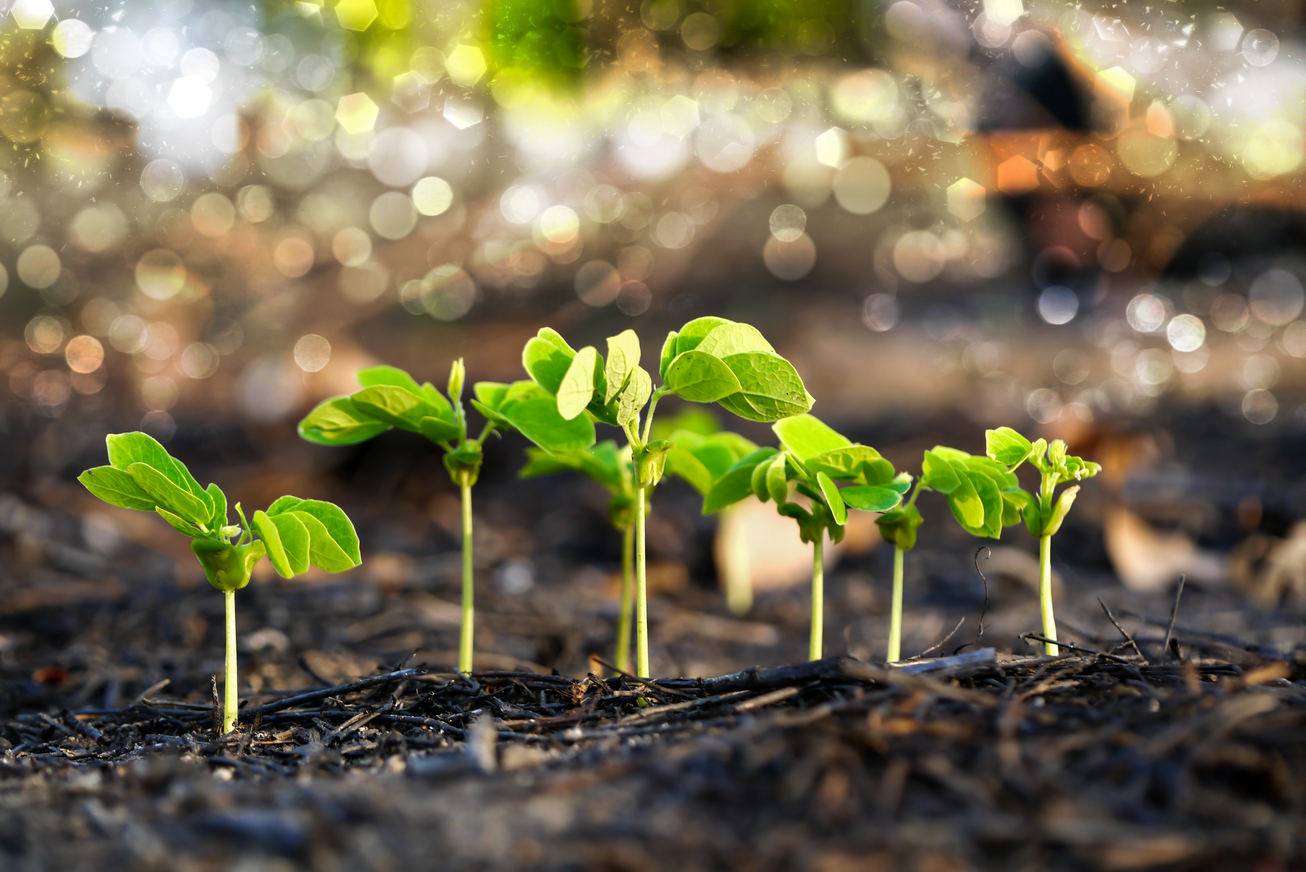 9590662-green-sprout-growing-from-seed