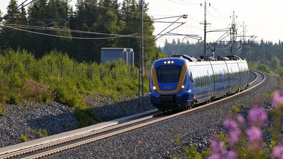 tåg i skogen på sommaren