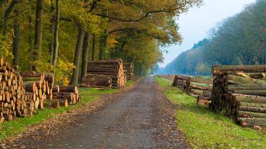 Ökade kostnader för små skogsnäringar