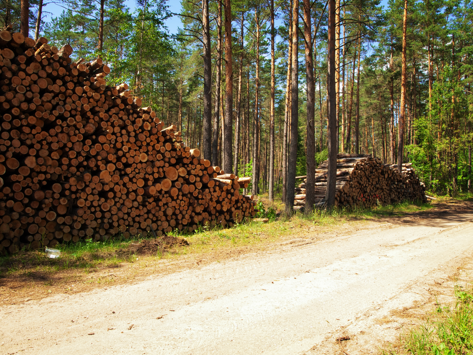 virke 2156781-logs-in-the-forest