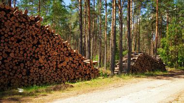 Fler avgifter för små skogsnäringar