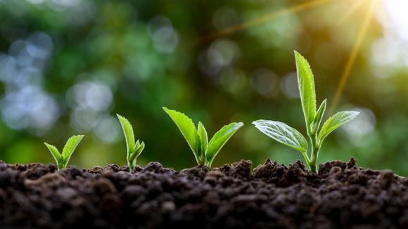 Gröna växande plantor