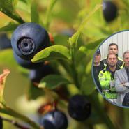 Ny skatteregel starkt hot mot blåbärsföretagare
