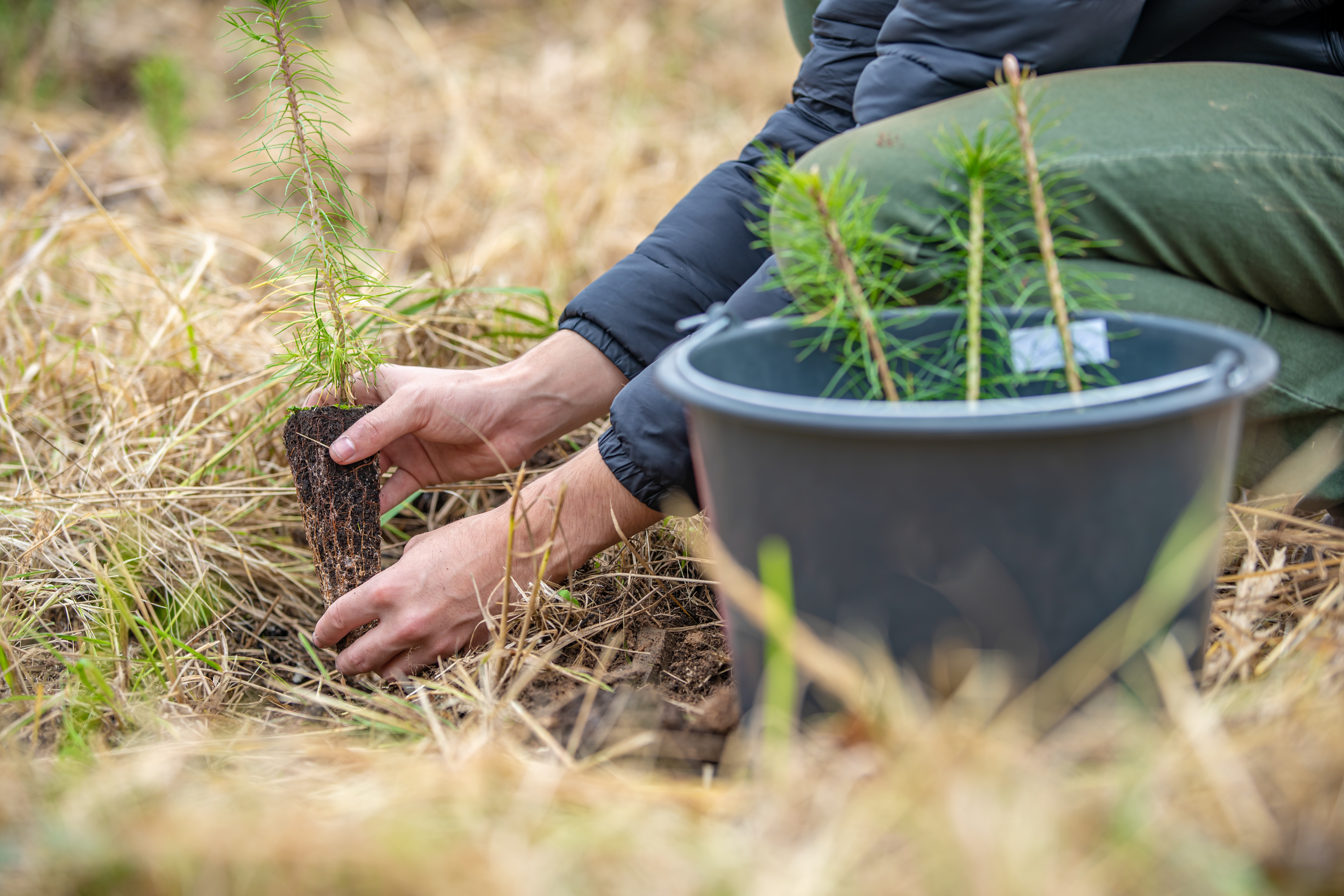 35916977-planting-young-trees-in-the-forest-after-devastating